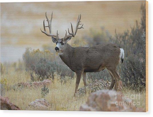 Desert Beast Wood Print