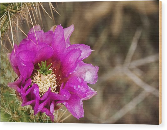 Desert Bloom Wood Print