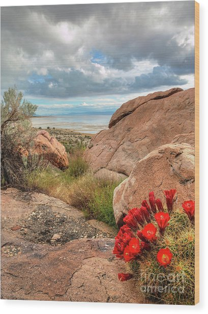 Wood Print featuring the photograph Desert Bloom by Spencer Baugh