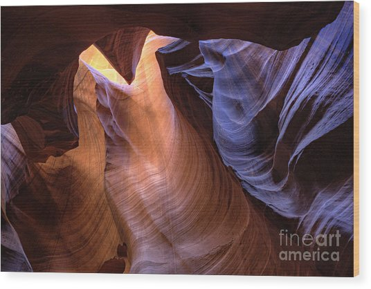 Desert Camel Wood Print