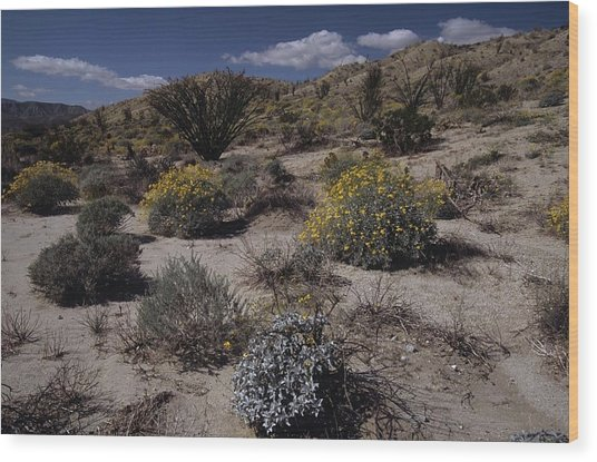Desert Canyon Wildflower Bloom Wood Print