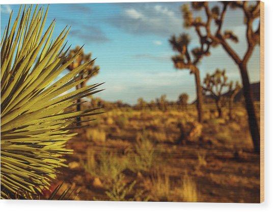 Desert Fan Wood Print