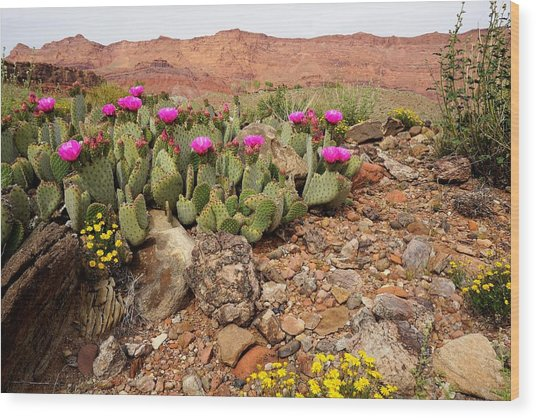 Desert Flowers Wood Print