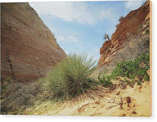 Desert Greenery Wood Print