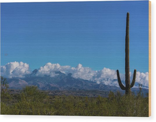 Desert Inversion Cactus Wood Print