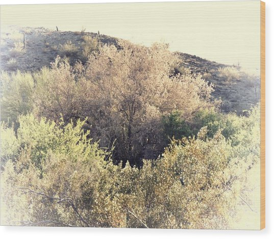 Desert Ironwood Afternoon Wood Print