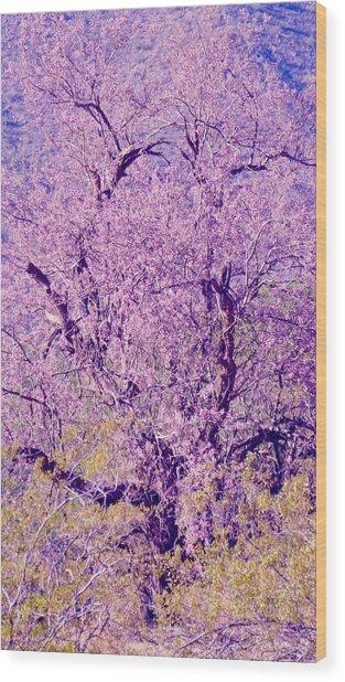 Desert Ironwood  Beauty 2 Wood Print