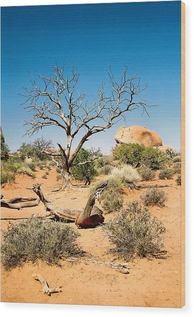 Desert Life Wood Print by Michael  Cryer