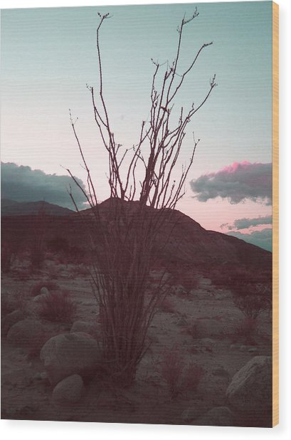 Desert Plant And Sunset Wood Print