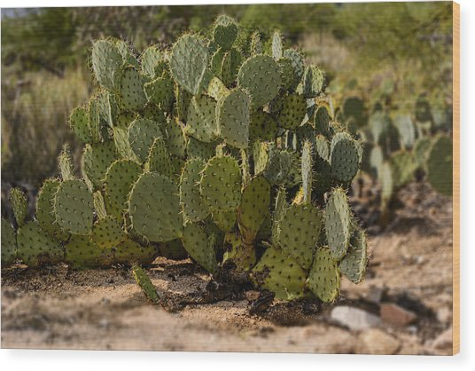 Desert Prickly-pear No6 Wood Print