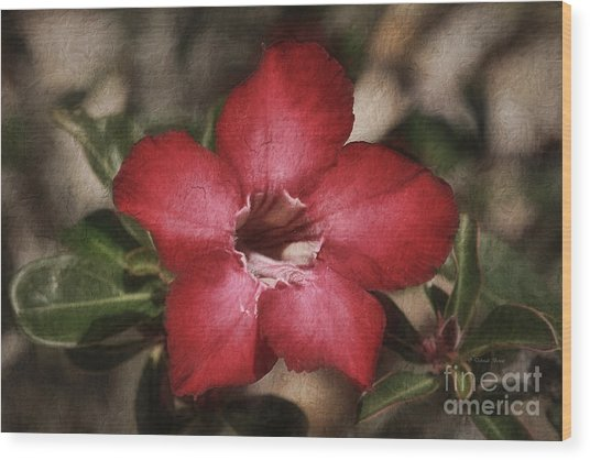 Desert Rose In Daytona Wood Print