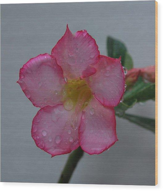 Desert Rose On White Wood Print by John Roncinske