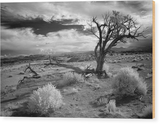 Desert Tree Wood Print by G Wigler