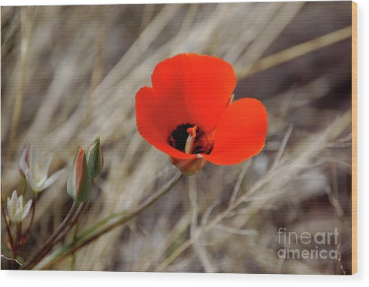 Desert Wildflower Wood Print