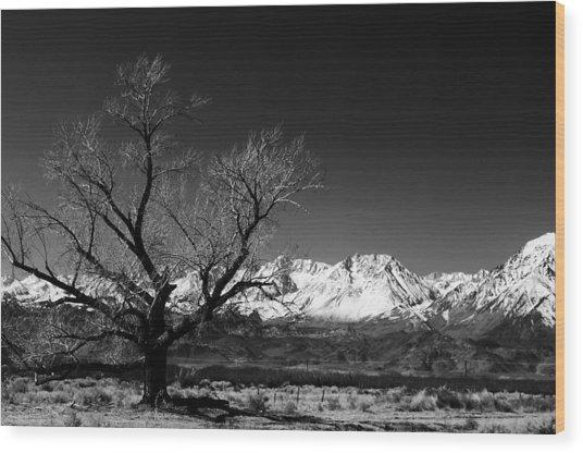 Desolation Wood Print by Jessica Roth