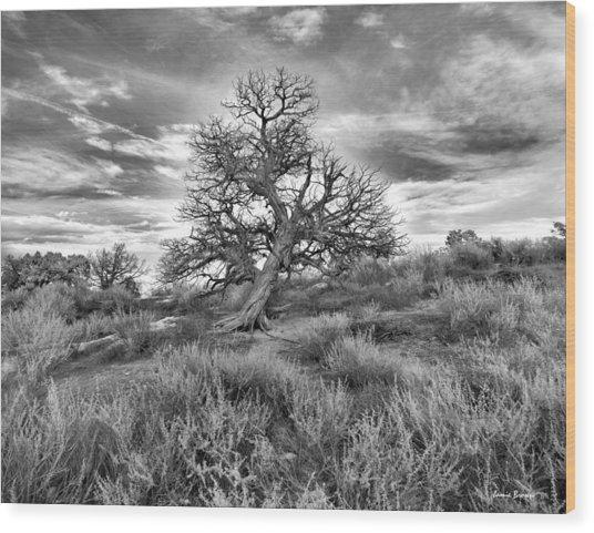 Devils Canyon Tree Wood Print