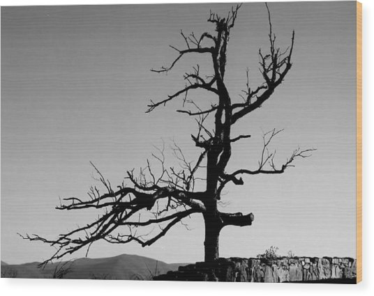 Devoid Of Life Tree Wood Print
