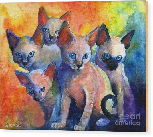 Devon Rex Kitten Cats Wood Print