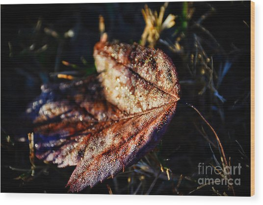 Dew Drops Sparkling And Showing Life On A Leaf -georgia Wood Print