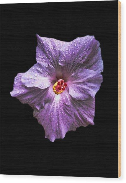 Dew Kissed Hibiscus Wood Print