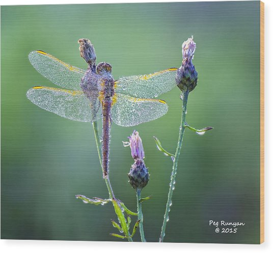 Dew Laden Dragonfly Wood Print