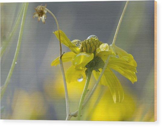 Dew On A Desert Bloom Wood Print