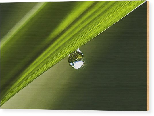 Dewdrop On A Blade Of Grass Wood Print by Michael Whitaker