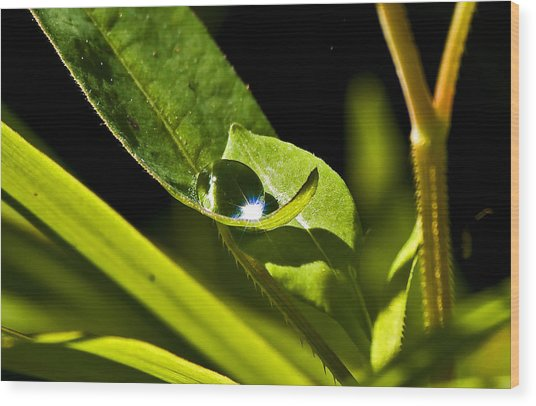 Dewdrop On A Leaf Wood Print by Michael Whitaker
