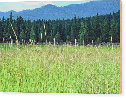 Diamond Mountain And Pine Forest Wood Print