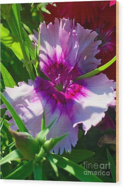 Dianthus Carnation Wood Print