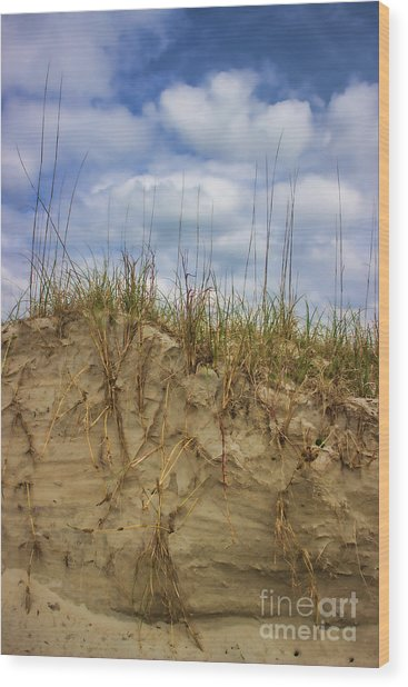Digging In Deep In Sand Dunes Wood Print