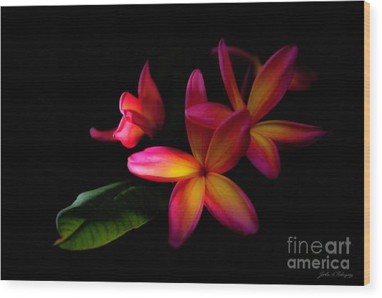 Digitized Sunset Plumerias  Wood Print