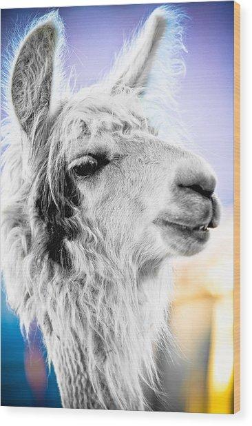 Dirtbag Llama Wood Print