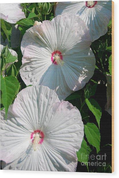 Dish Flower Wood Print