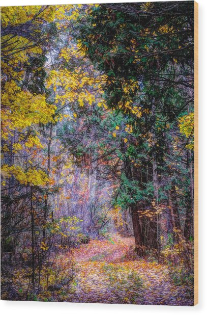 Distant Path Wood Print