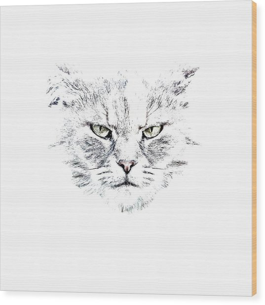 Disturbed Cat Wood Print