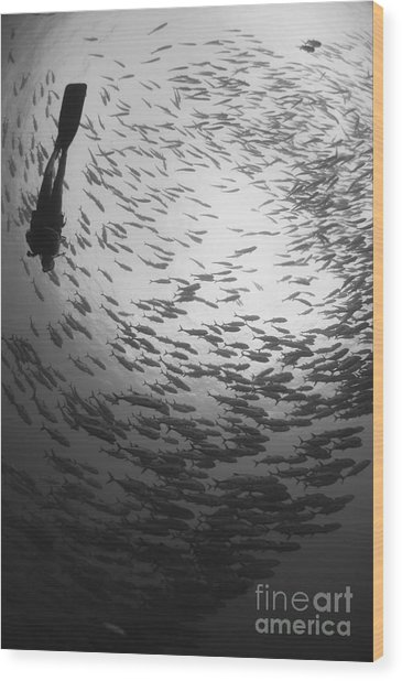 Diver And A Large School Of Bigeye Wood Print