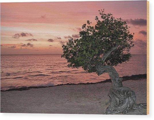 Divi Divi Aruba Wood Print