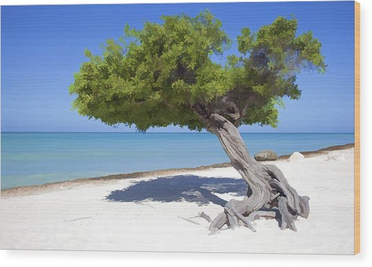 Divi Tree Of Aruba Wood Print