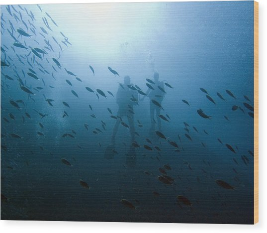 Diving With Fishes Wood Print