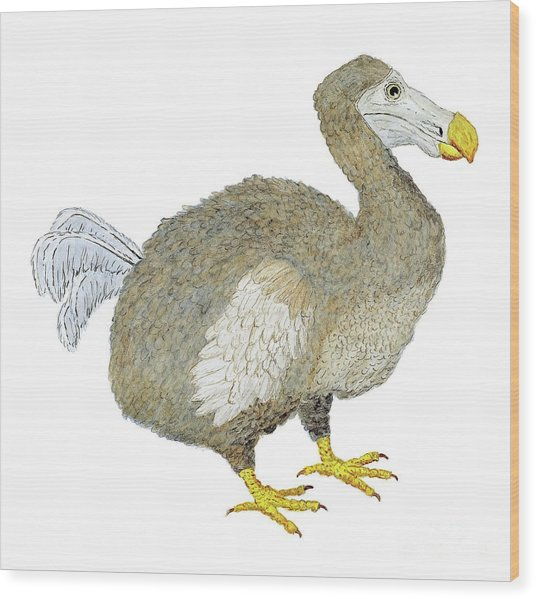 Dodo Bird Protrait Wood Print