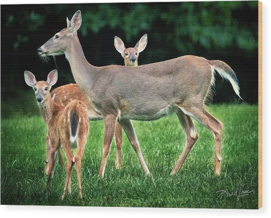 Wood Print featuring the photograph Doe And Two Fawns by David A Lane