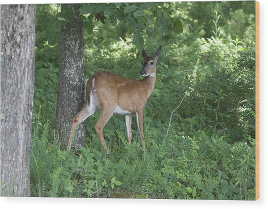 Doe In The Forest Wood Print by Tina B Hamilton