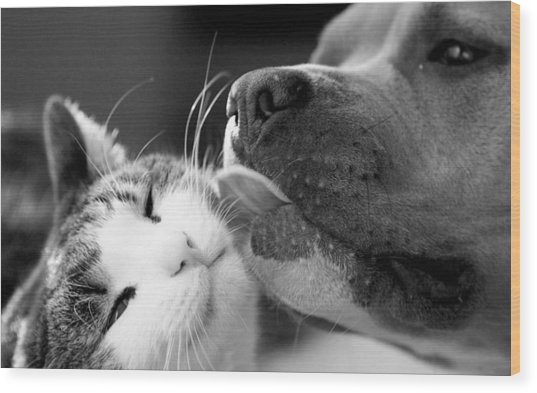 Dog And Cat  Wood Print