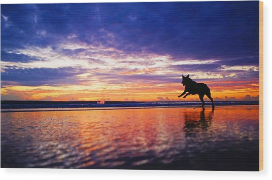 Dog Chasing Stick At Sunrise Wood Print