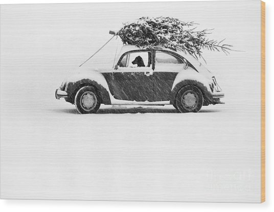 Dog In Car  Wood Print