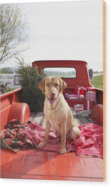 Dog In Truck Bed With Pine Tree Outdoors Wood Print