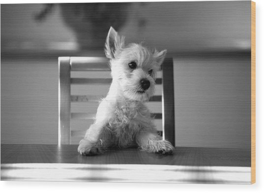Dog Sitting On The Table Wood Print