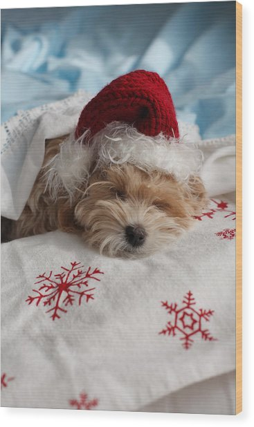 Dog Sleeping In Bed With Santa Hat Wood Print