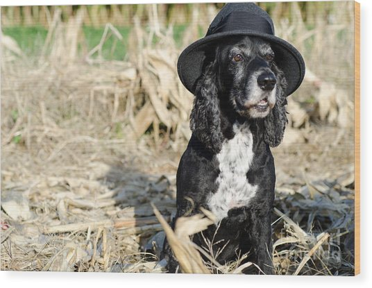 Dog With A Hat Wood Print